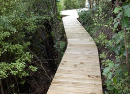 Bush Boardwalk